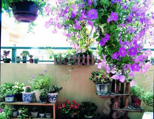巧妙摆放植物改变家居