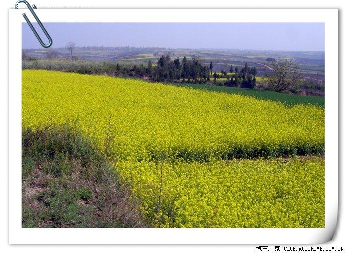 高6伴我去看漫山遍野油菜花 1.6手舒版灰外黑内1111km高清图片